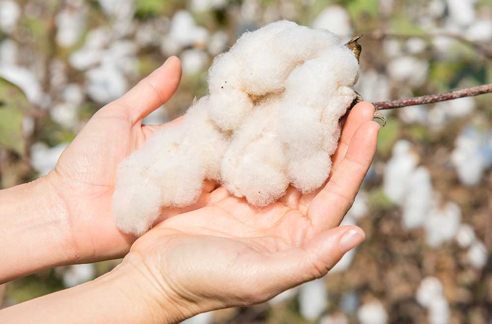Qualitätsprüfung Bio-Baumwolle